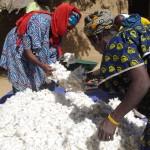 Du coton pour les femmes